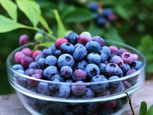 BlueBerries-copy