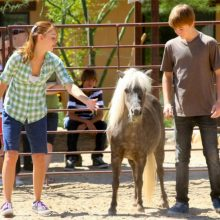 Adolescent Patients Playing With Mini Horse - Equine Therapy - Rosewood Centers For Eating Disorders