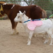 Animal Theater - Animal Assisted Therapy - Rosewood Centers For Eating Diorders