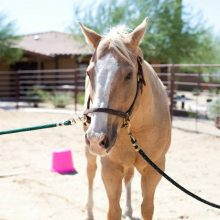 Beautiful Horse - Equine Therapy - Rosewood Centers For Eating Disorders
