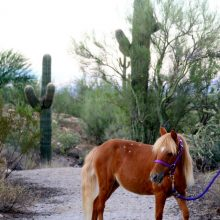 Beautiful Horse In The Desert - Equine Therapy - Rosewood Centers For Eating Disorders