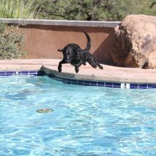 Cash Jumping In The Pool - Canine Therapy - Rosewood Centers For Eating Disorders