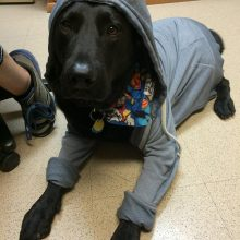 Cash Looking Adorable - Canine Therapy - Rosewood Centers For Eating Disorders