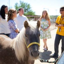Cheryl Musick Counseling Family During Equine Therapy Session - Rosewood Centers For Eating Disorders
