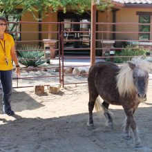 Cheryl Musick With Mini Horse - Equine Therapy - Rosewood Centers For Eating Disorders