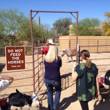 Equine Experiential On Professional Onsite Viist - Equine Therapy - Rosewood Centers For Eating Disorders