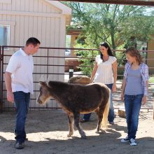 Family Equine Therapy - Rosewood Centers For Eating Disorders