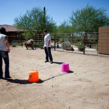 Family Experiencing Equine Therapy Session - Rosewood Centers For Eating Disorders