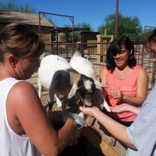 Feeding Goats - Animal Assisted Therapy - Rosewood Centers For Eating Disorders