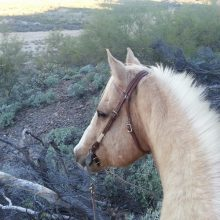 Horse Looking Over Desert - Equine Therapy - Rosewood Centers For Eating Disorders