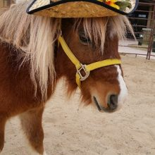 Howdy Brewster - Equine Therapy - Rosewood Centers For Eating Disorders