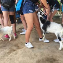 Kids Playing With Baby Goats - Animal Assisted Therapy - Rosewood Centers For Eating Disorders