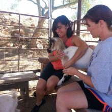 Milo Is Always Looking For Attention - Animal Assisted Therapy - Rosewood Centers For Eating