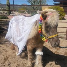 Mini Horse Fashion - Equine Therapy - Rosewood Centers For Eating Disorders