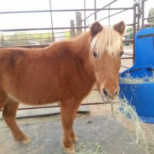 Mini Horse Says Hello - Animal Assisted Therapy - Rosewood Centers For Eating Disorders