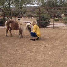 Rosie Connects With Visiting Professional - Equine Therapy - Rosewood Centers For Eating Disorders