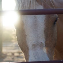 Sun Shining On Horse - Equine Therapy - Rosewood Centers For Eating Disorders