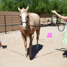 Teaching Moment During Equine Therapy Session - Rosewood Centers For Eating Disorders