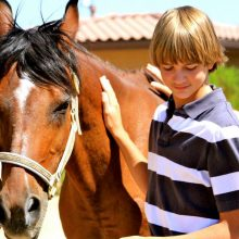 Young Boy Building Trust - Equine Therapy - Rosewood Centers For Eating Disorders